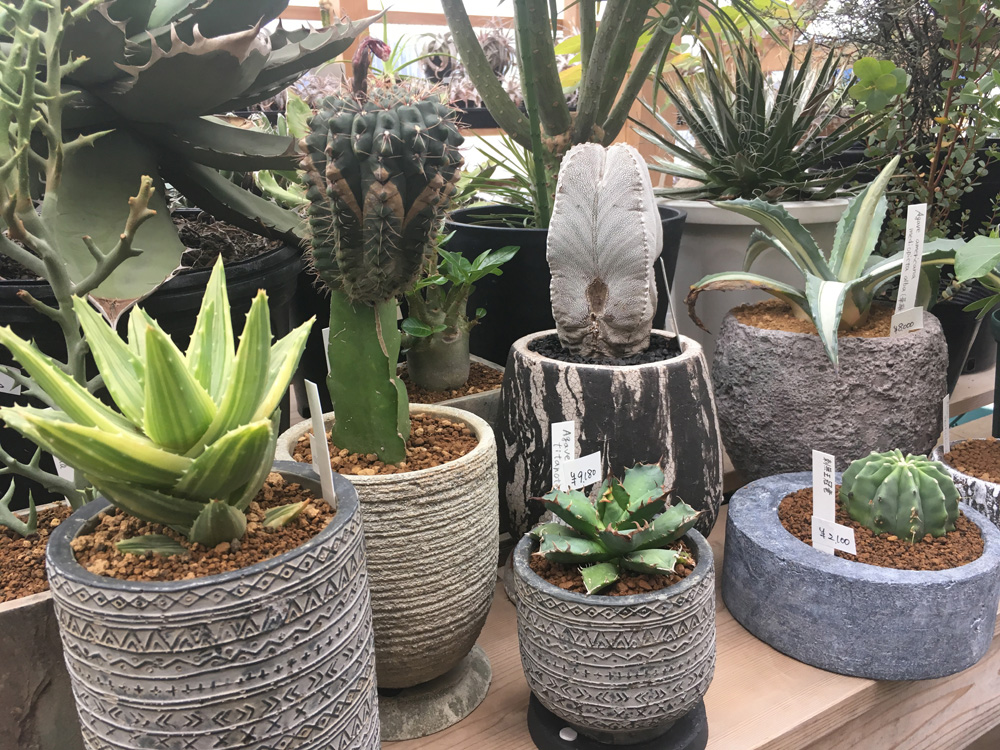 植物が鉢に入りご主人待ち。